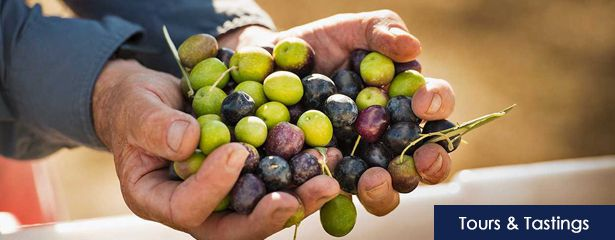 Ojai Olive Oil Tours and Tasting